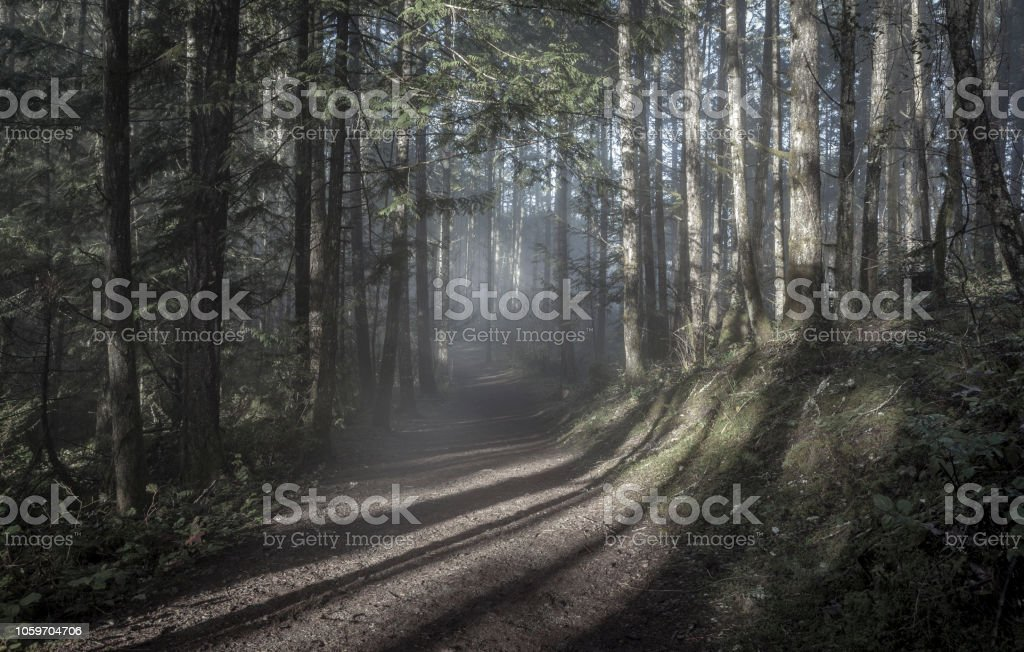Vancouver Island Forest stock photo
