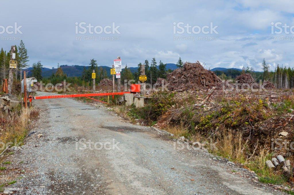 Vancouver island logging stock photo