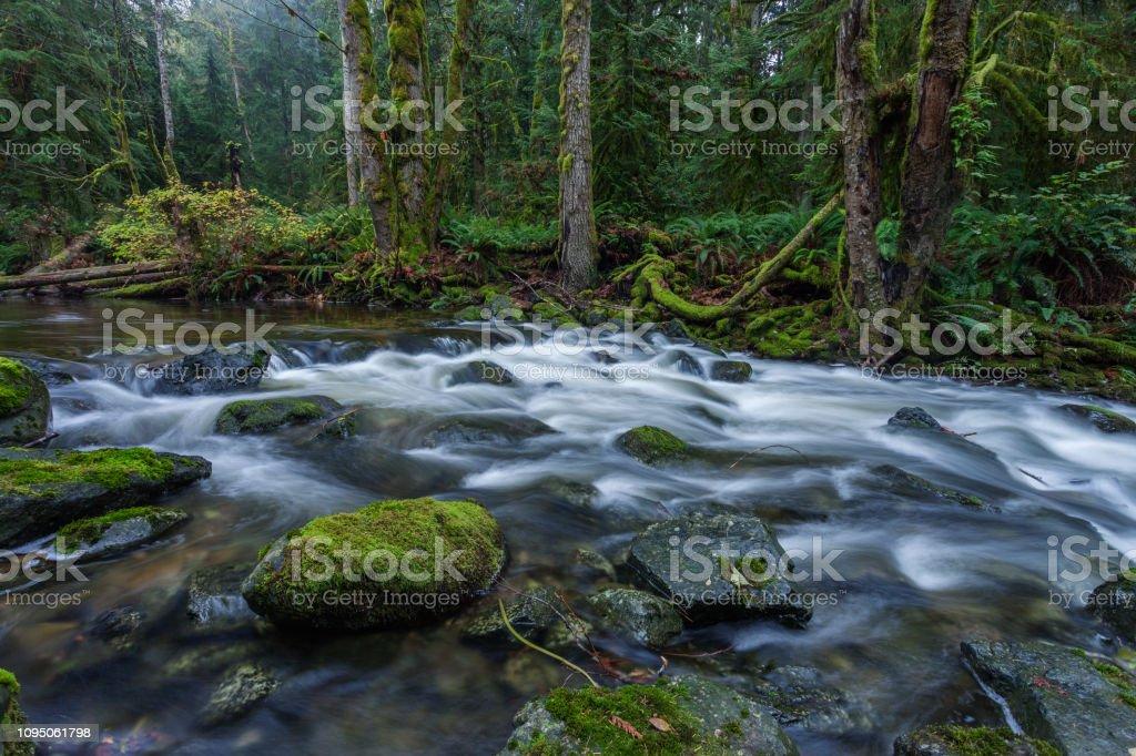 Vancouver Island Nature stock photo