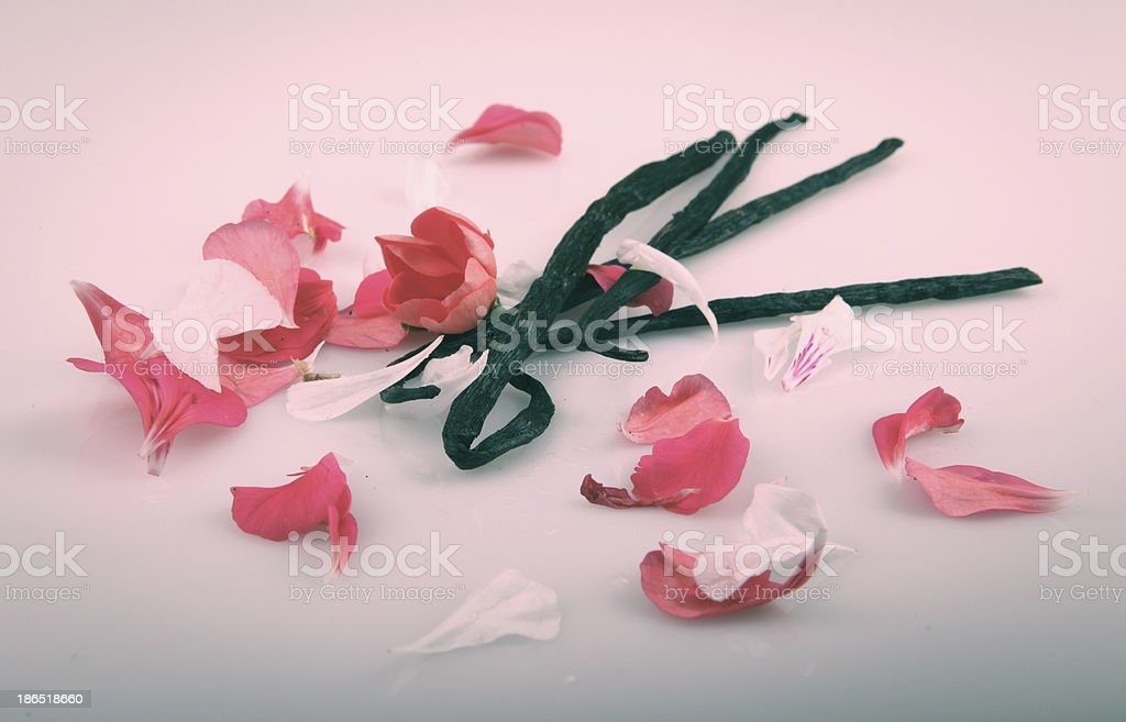 Vanilla Bean And Flower royalty-free stock photo