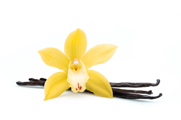 haricots de vanille et fleur sur le fond blanc avec le chemin de découpage - vanille photos et images de collection