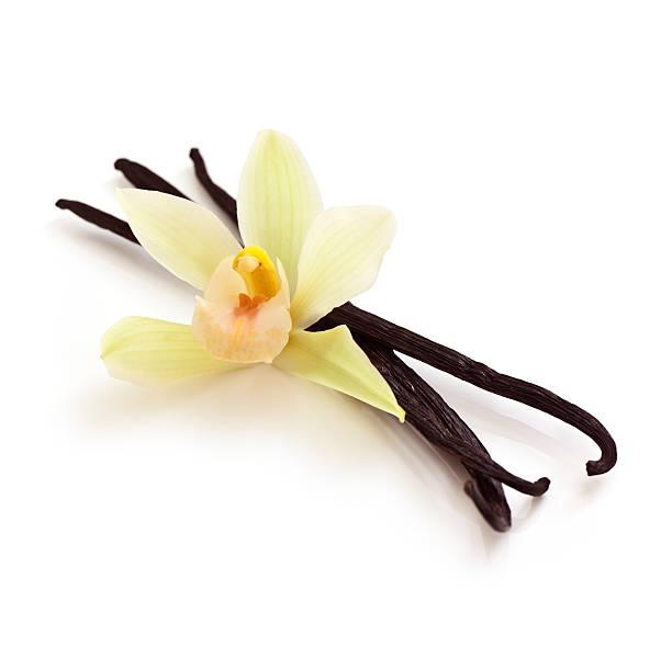 gousses de vanille et orchidée - vanille photos et images de collection