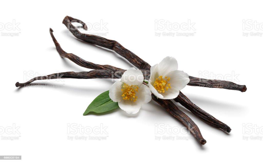 Vanilla Beans with Jasmine - foto de acervo