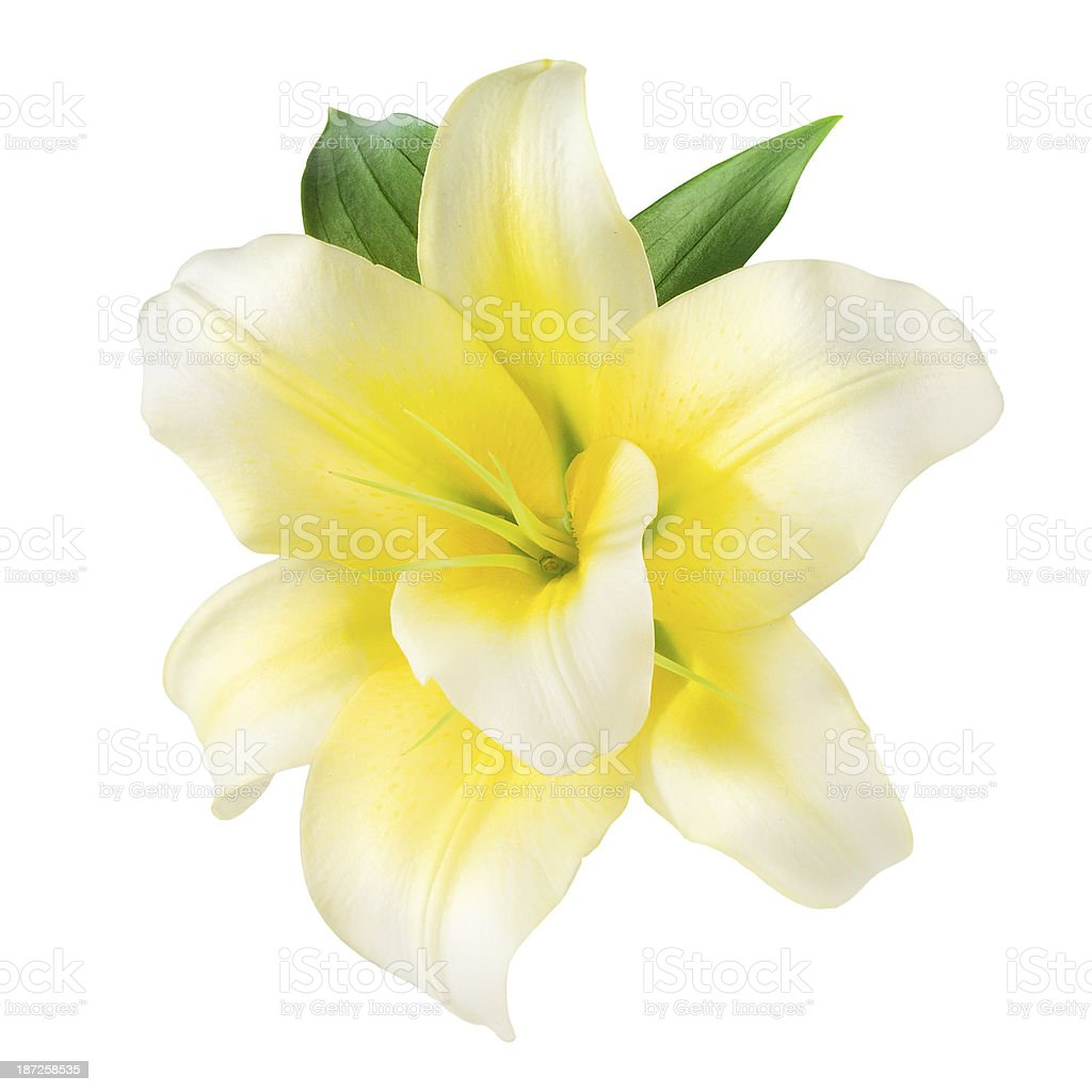 Vanilla Flower isolated on white. With clipping path stock photo