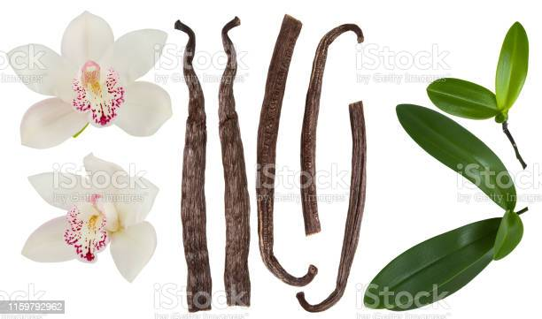 Vanilla isolated on white background set orchid flower stick or dry picture id1159792962?b=1&k=6&m=1159792962&s=612x612&h=dxjx4eovp mnqilkc1okye1pxwiad8fjjmnddhfpt8e=