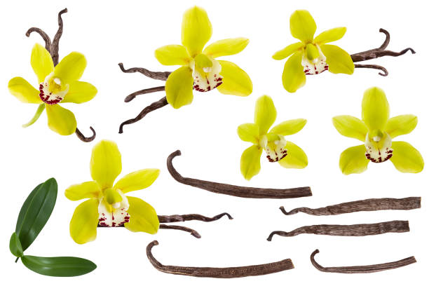 Vanilla isolated on white background set orchid yellow flower stick picture id1150268429?b=1&k=6&m=1150268429&s=612x612&w=0&h=eazl pdfntmh2smez24hy5ipfa9p0697f8kyglxa70u=
