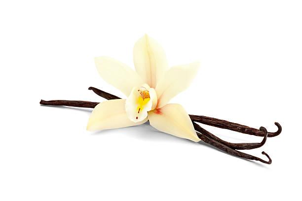 vanille isolé sur blanc - vanille photos et images de collection