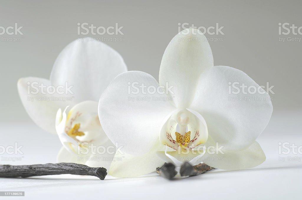 Vanilla stock photo