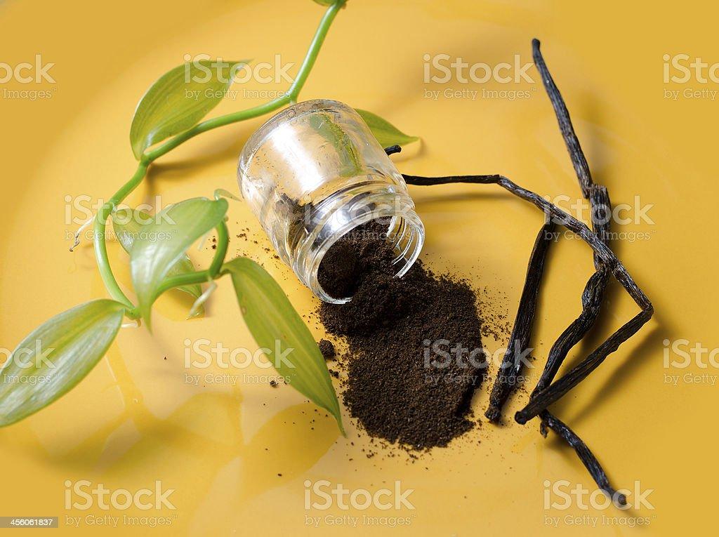 Vanilla pods, seeds powder and fresh plant stock photo