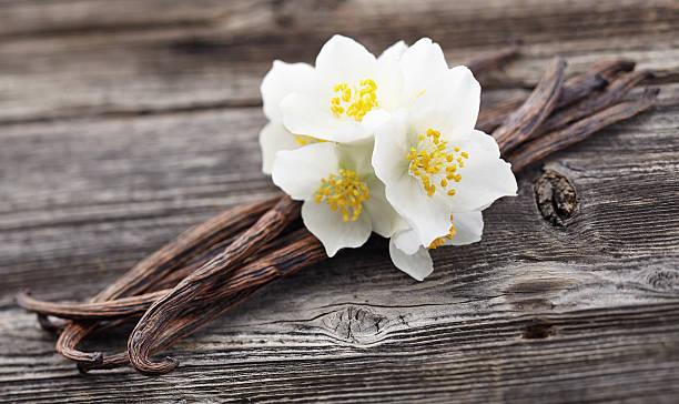gousses de vanille avec jasmine - vanille photos et images de collection