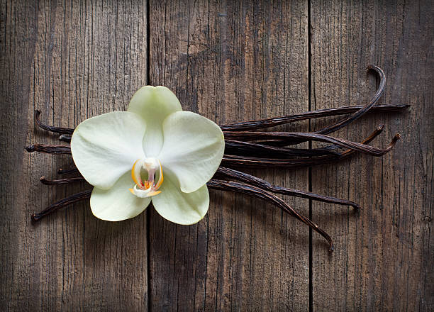 Vanilla sticks and flower on the wood background picture id157359520?b=1&k=6&m=157359520&s=612x612&w=0&h=tzteze4zx7zvecmvg7i7s2qn jv4avlo 0xdf9x5we0=