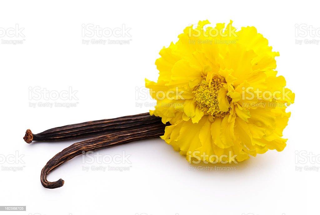 Vanilla sticks and yellow flower royalty-free stock photo