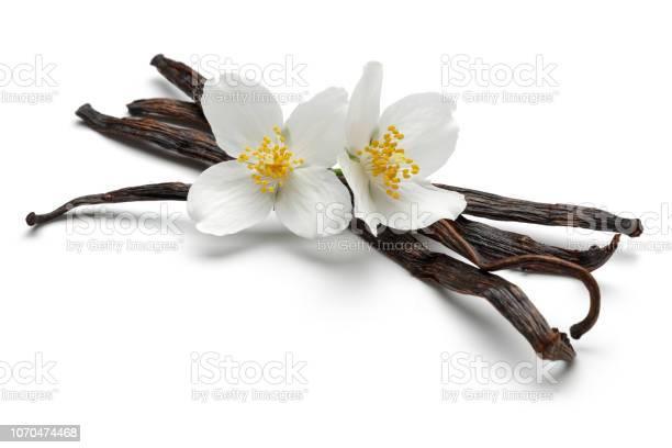 Vanilla sticks with jasmine flowers picture id1070474468?b=1&k=6&m=1070474468&s=612x612&h=ktgy7dbmtjg50ys mo hodajxdkeunemmqhqjd09f2y=