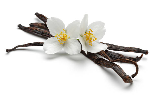 Vanilla sticks with jasmine flowers picture id1070474468?b=1&k=6&m=1070474468&s=612x612&w=0&h=og  ocrzxagi053m8smbqm1vbhsrcyovmutt2jcw9lo=