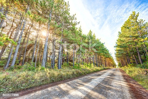 istock Vanishing dirt paved rocky road through pine tree forest in Dolly Sods, West Virginia in autumn with shadows, sunburst sun, rays bursting through 855577996