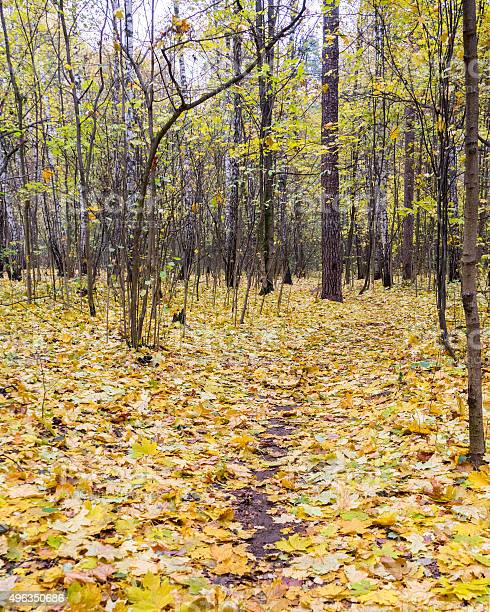 Photo of Vanishing footpath in forest covered by autumn leaves