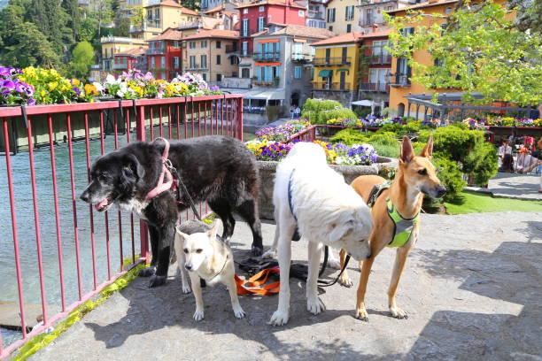 Varenna Dorf am Comer See in der Lombardei, Italien – Foto