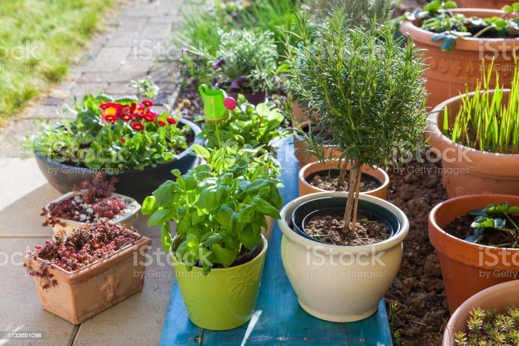 Variation Of Flower Pots With Herbs And Other Plants Stock Photo