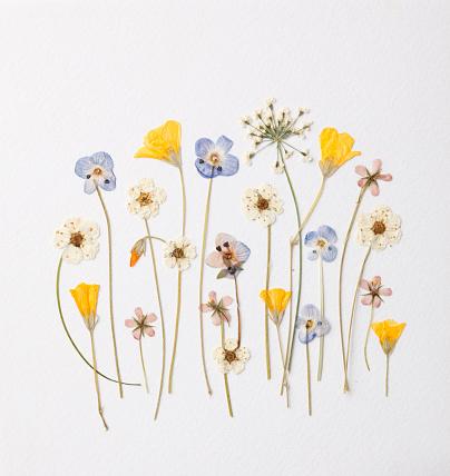 Artistic arrangement of little garden flowers