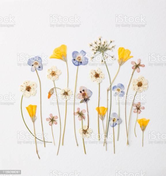 Variation of garden flowers picture id1159288261?b=1&k=6&m=1159288261&s=612x612&h=qmxzj3vnlvuai4xloaszuejqq7eq7 ls 2iava6i6z0=