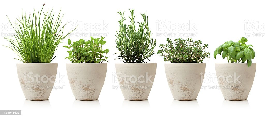 variaty of cooking herbs in pots stock photo