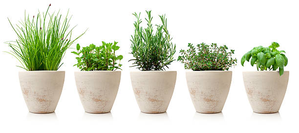 variaty of cooking herbs in pots - kookgerei stockfoto's en -beelden