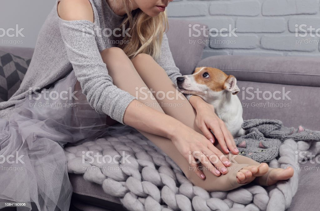 Varicose veins prevention, woman wearing high Compression Stockings close up, dog supports owner stock photo