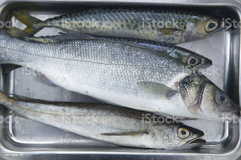 Varied sea fish  on stainless steel tray royalty-free stock photo