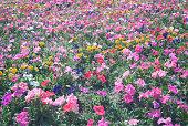 Variegated blossom flower bed under the summer sun closeup