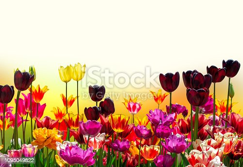 901386728 istock photo varieties, background for greeting banner 1095049822