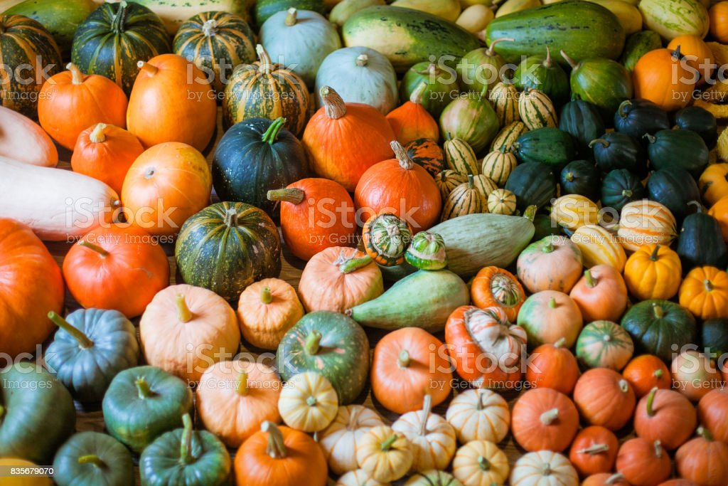 varieties of squashes and pumpkins stock photo