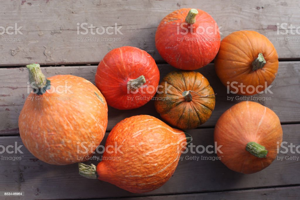 Varieties of squashes and pumpkins. stock photo