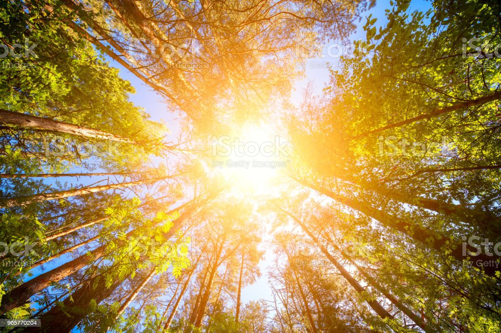 Variety crowns of the trees in the spring forest against the blue sky with the sun. Bottom view of the trees - Royalty-free Angle Stock Photo