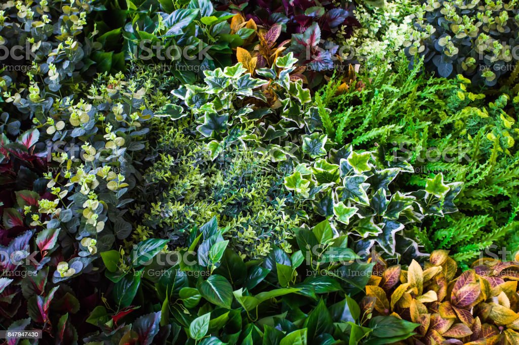 Variety of artificial plant in vertical garden stock photo
