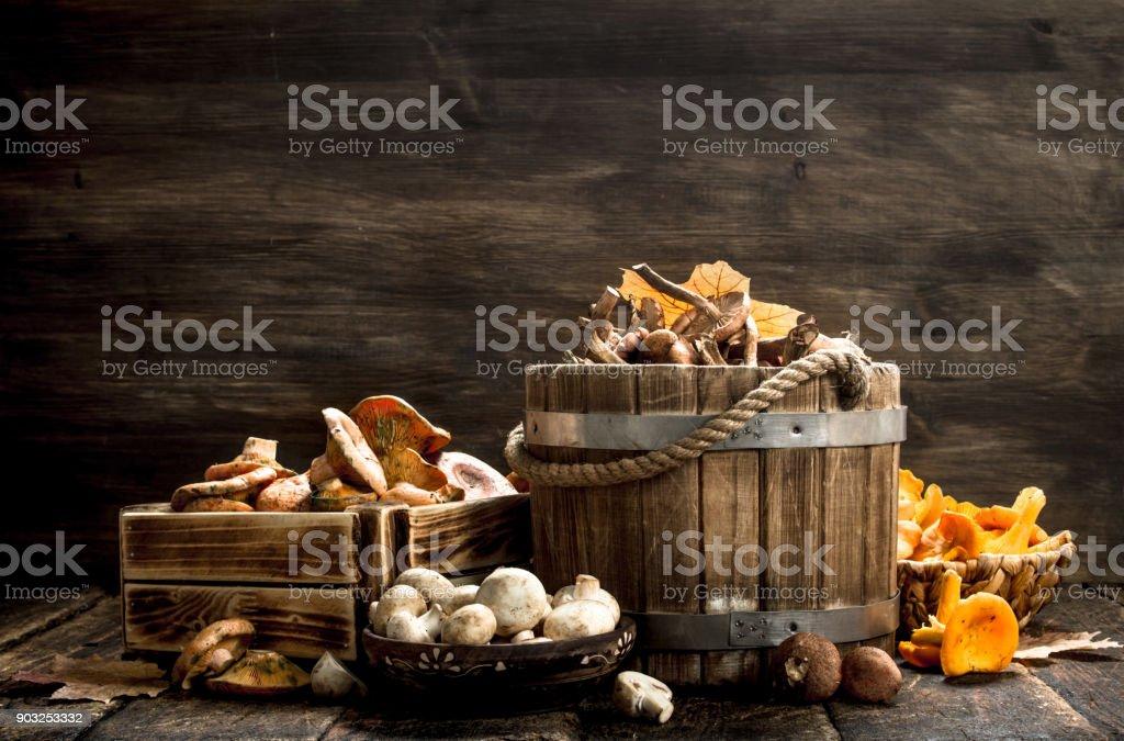 variety of autumn mushrooms. stock photo