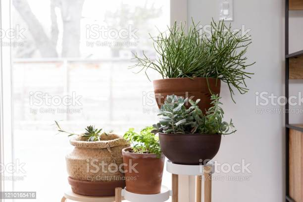 Photo of Variety of beautiful potted plants