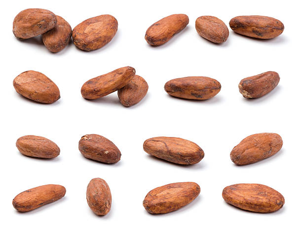 Variety of cocoa beans  cocoa bean stock pictures, royalty-free photos & images