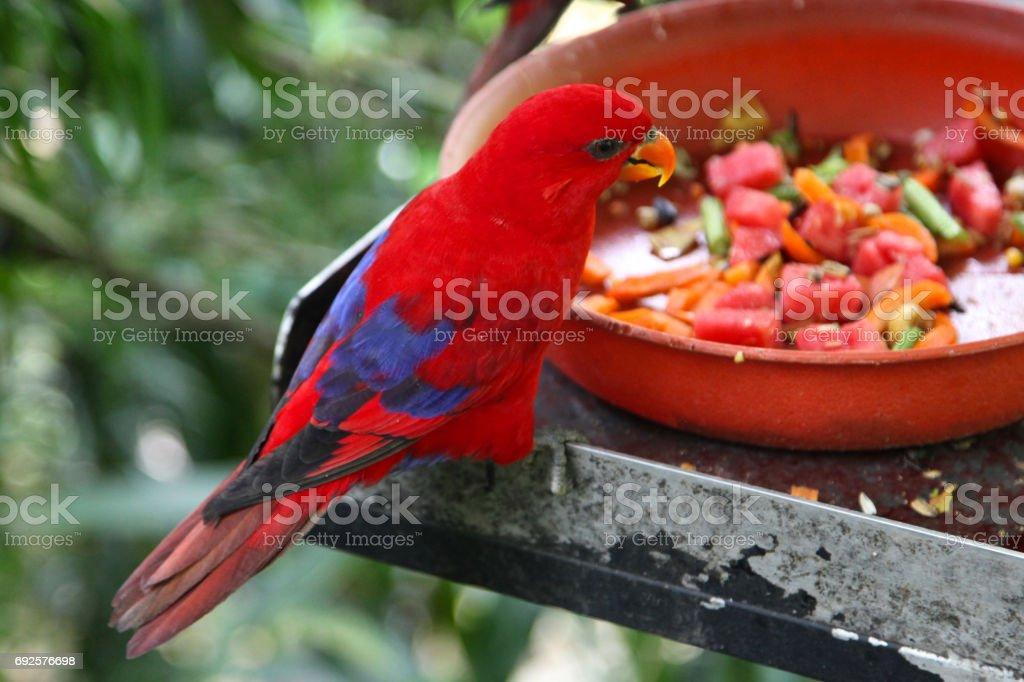 Variety of colorful birds, Singapore stock photo