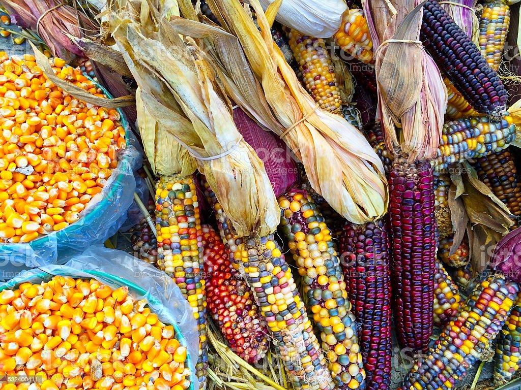 Variety of colorful corn Variety of colorful corn. Autumn market. 2015 Stock Photo