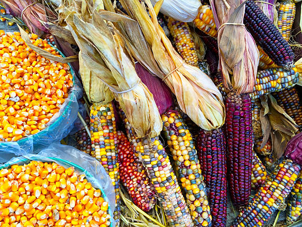 Variety of colorful corn stock photo