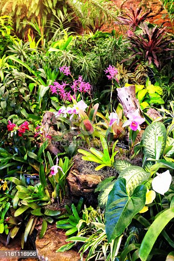 A wide variety of beautiful and colorful orchids and other tropical plants; could be used as natural background.
