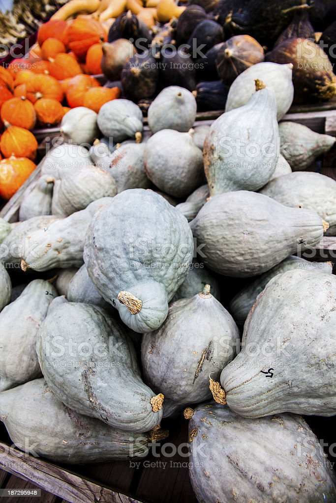 Variety of colorful selection of pumpkins royalty-free stock photo