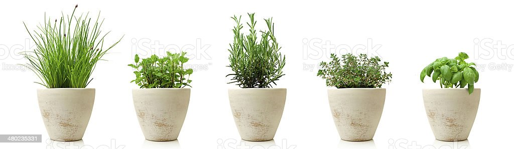 variety of cooking herbs in pots isolated stock photo