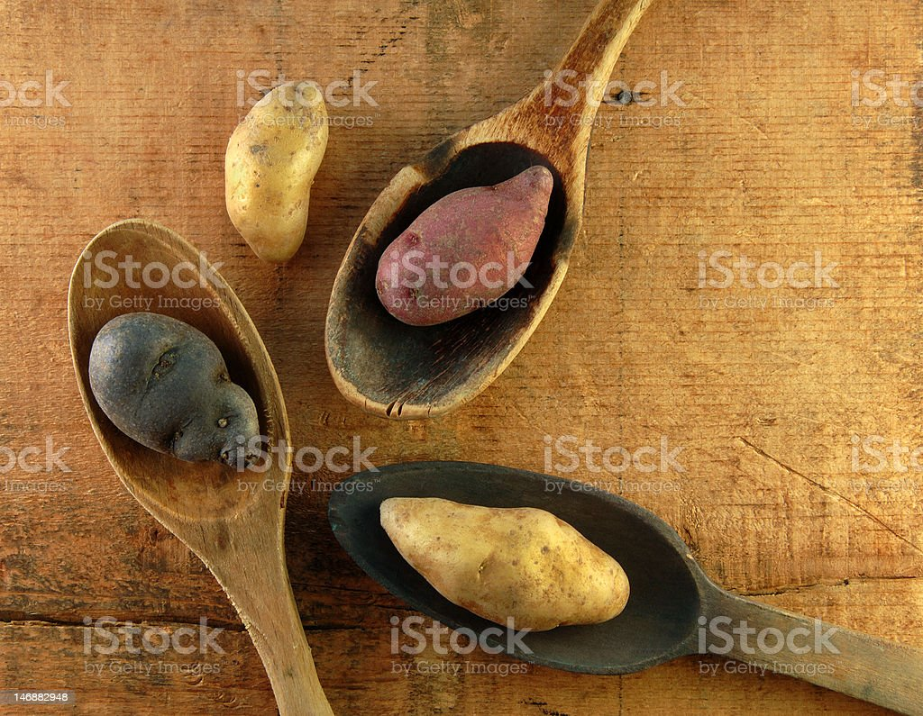 Variety of Fingerling Potatoes in Wooden Spoons royalty-free stock photo