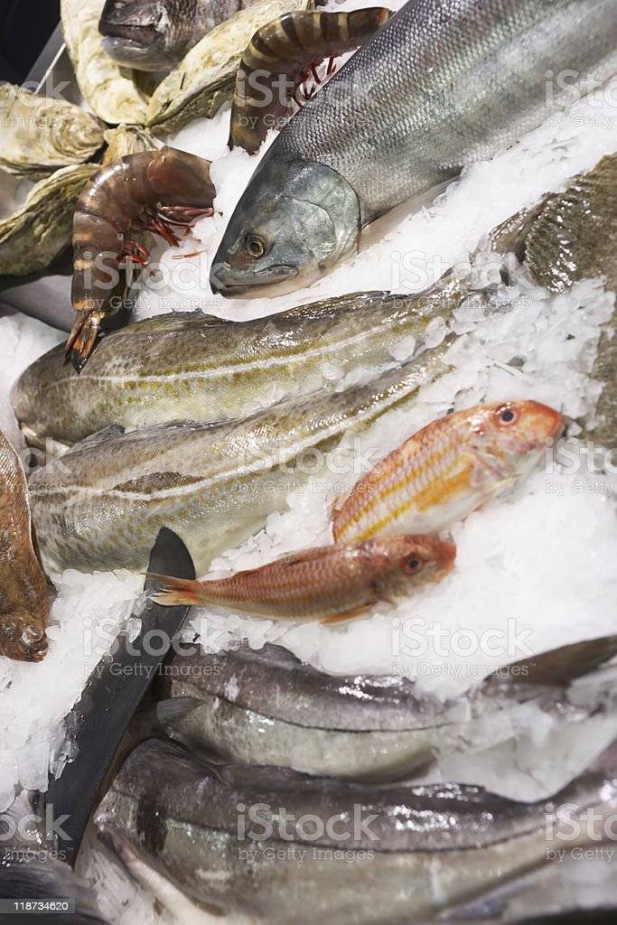 Variety of fish and seafood on market ice display royalty-free stock photo
