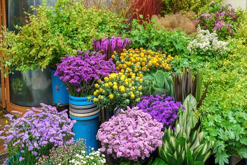 Vielfalt An Blumen Und Pflanzen Verkauf Im Blumengeschäft In Kurumon Markt Osaka Japan Stockfoto und mehr Bilder von Asien
