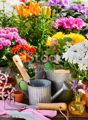 Variety of flowers and pots with decorations in the garden background