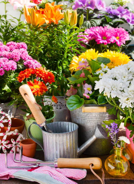 Variety of flowers and pots with decorations in the garden Variety of flowers and pots with decorations in the garden background potting stock pictures, royalty-free photos & images