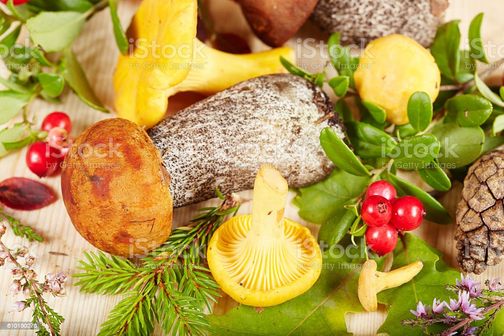 Variety of forest mushrooms and herbs stock photo