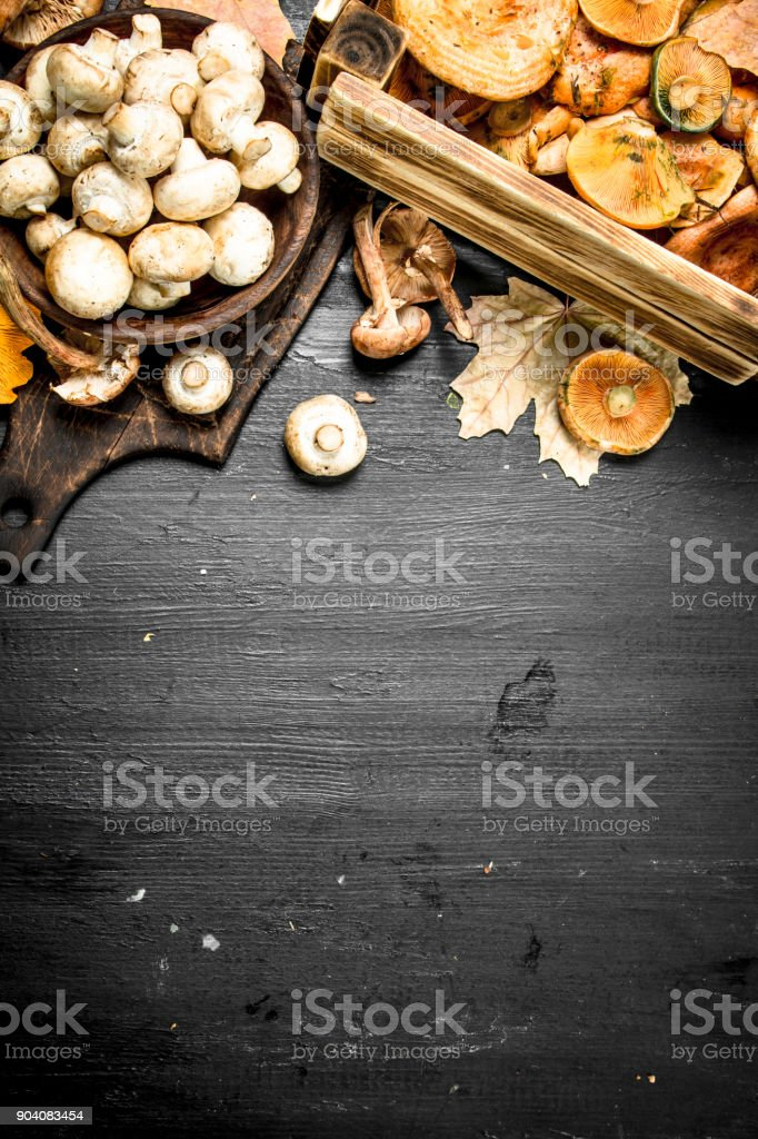 variety of forest mushrooms in boxes and bowls. stock photo
